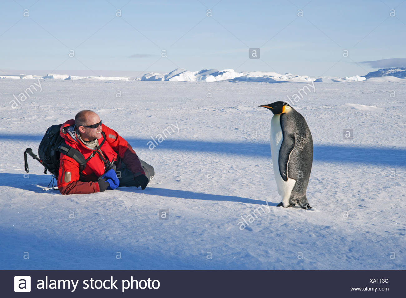 A man lying on his side on the ice close to an emperor penguin standing motionless - Stock Image