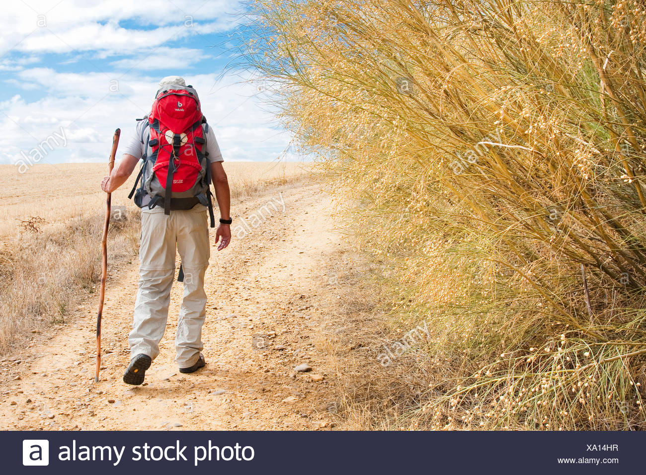 Way of St. James, pilgrim on the arduous way from San Nicol�s del Real Camino to Sahagun,, Spain, Castile and Leon, Leon - Stock Image