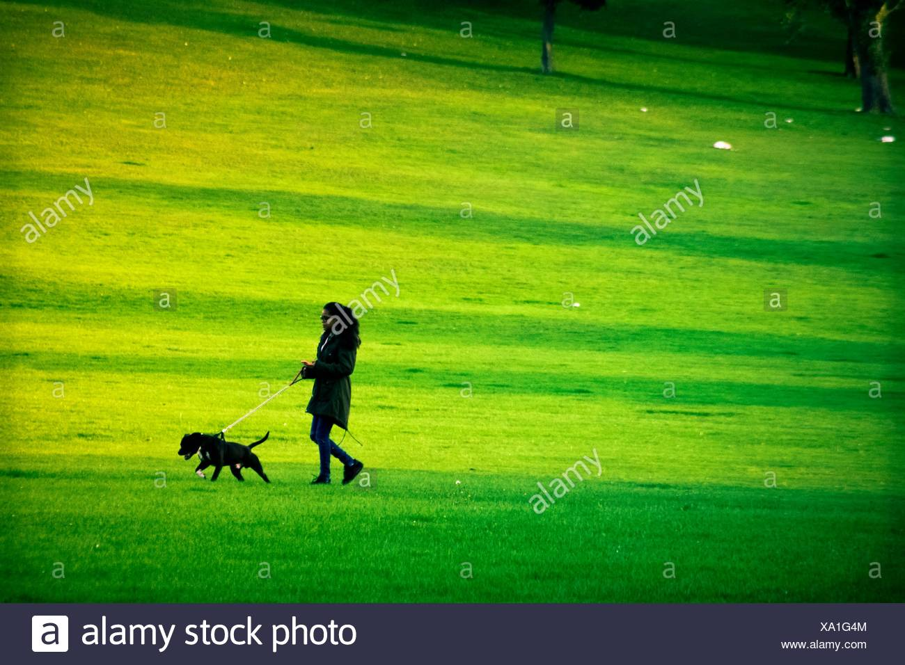 Dog Walking Wimbledon Common