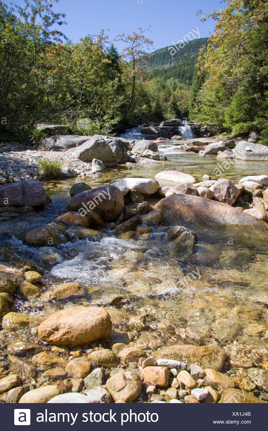 mountains stream firs - Stock Image