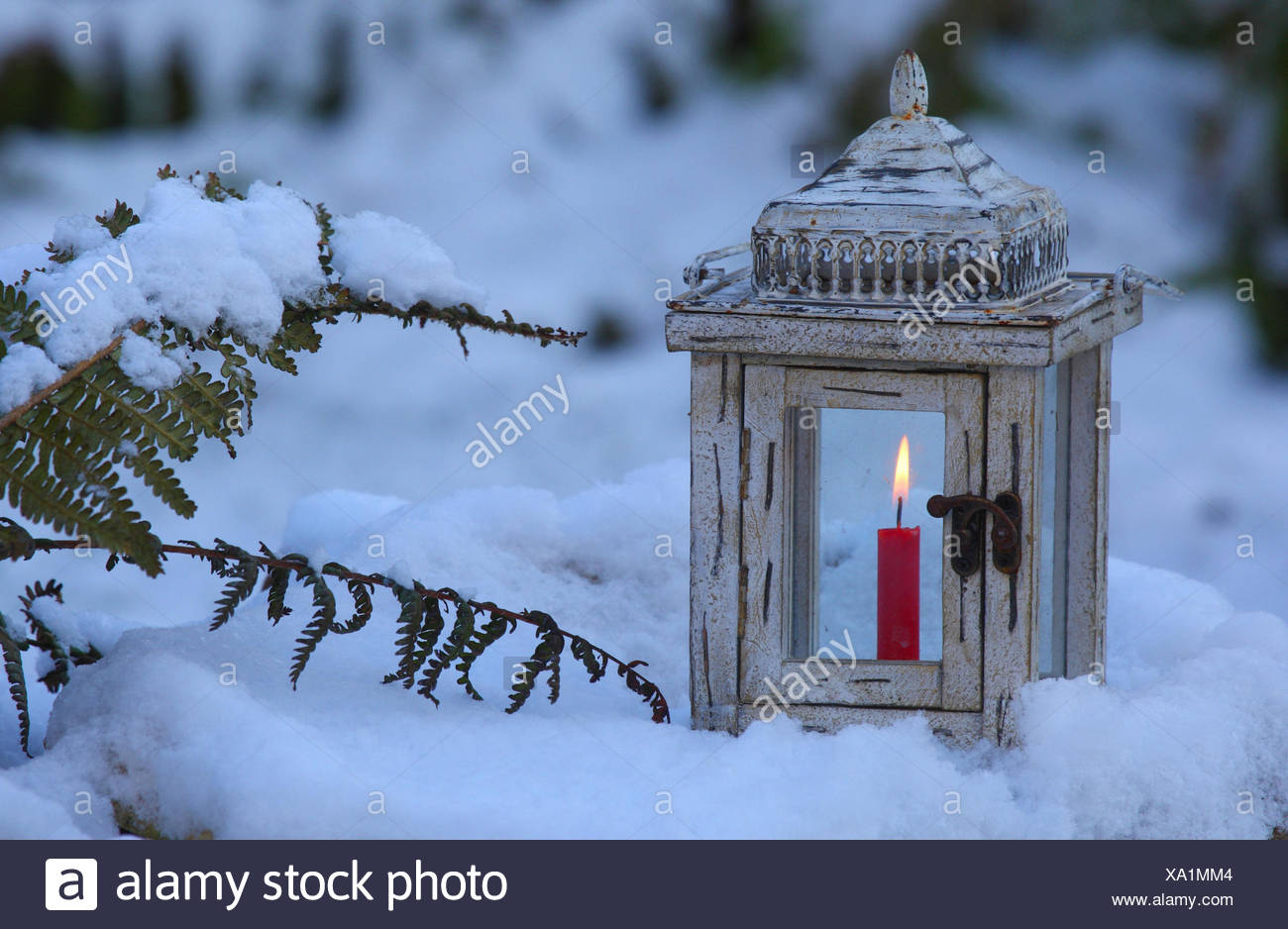 Lantern, candle, burn, snow, candlelight, flame, garden, lamp, light, winter, Gemrany - Stock Image