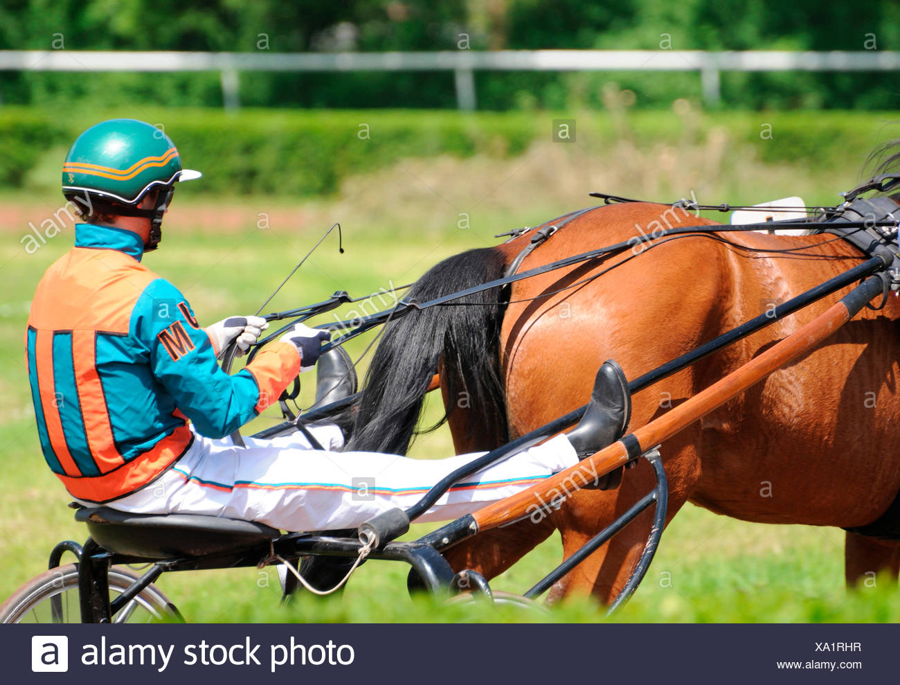 Harness racing / Standardbred, Trotter, sulky, driver, harness Stock