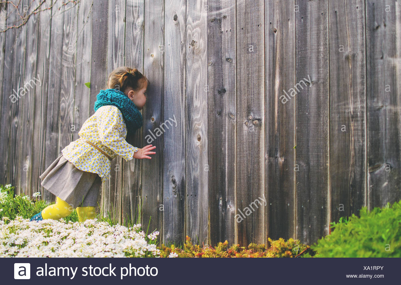 Girl (2-3) looking trough wooden fence - Stock Image
