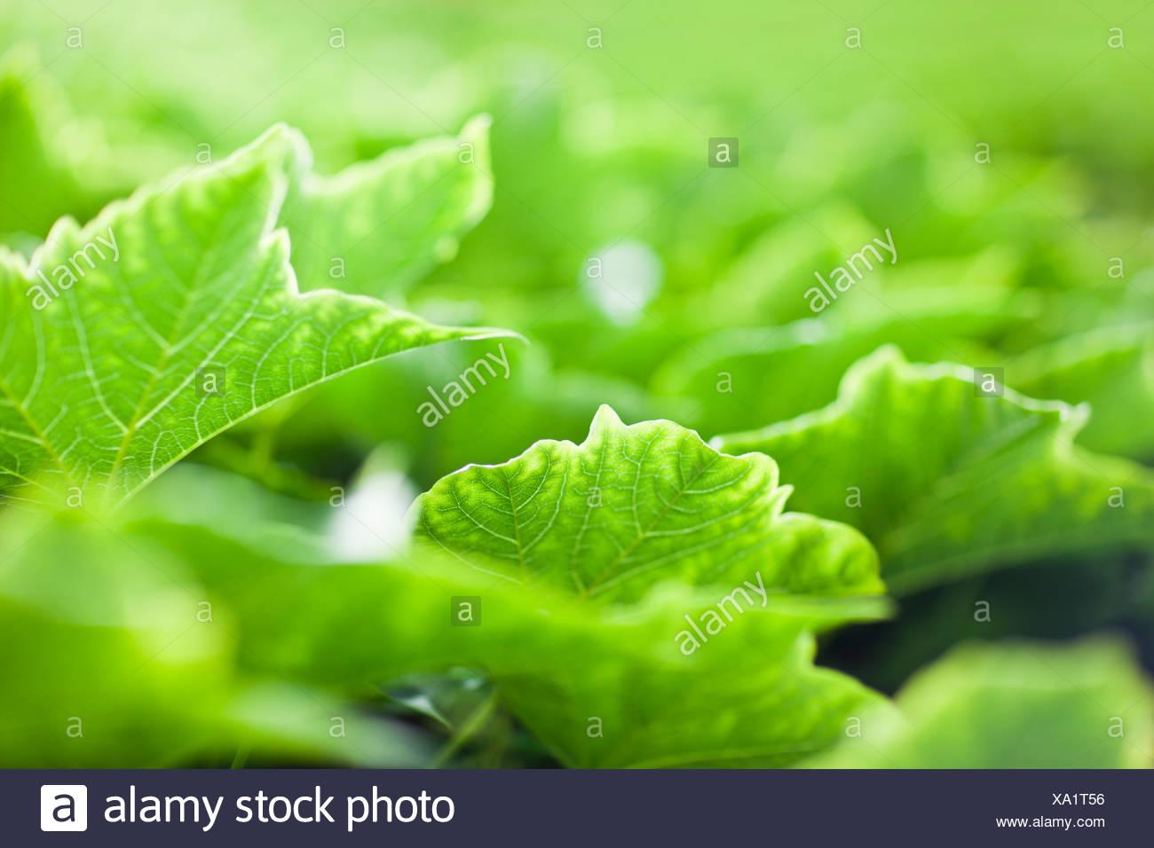 Greenery - Stock Image