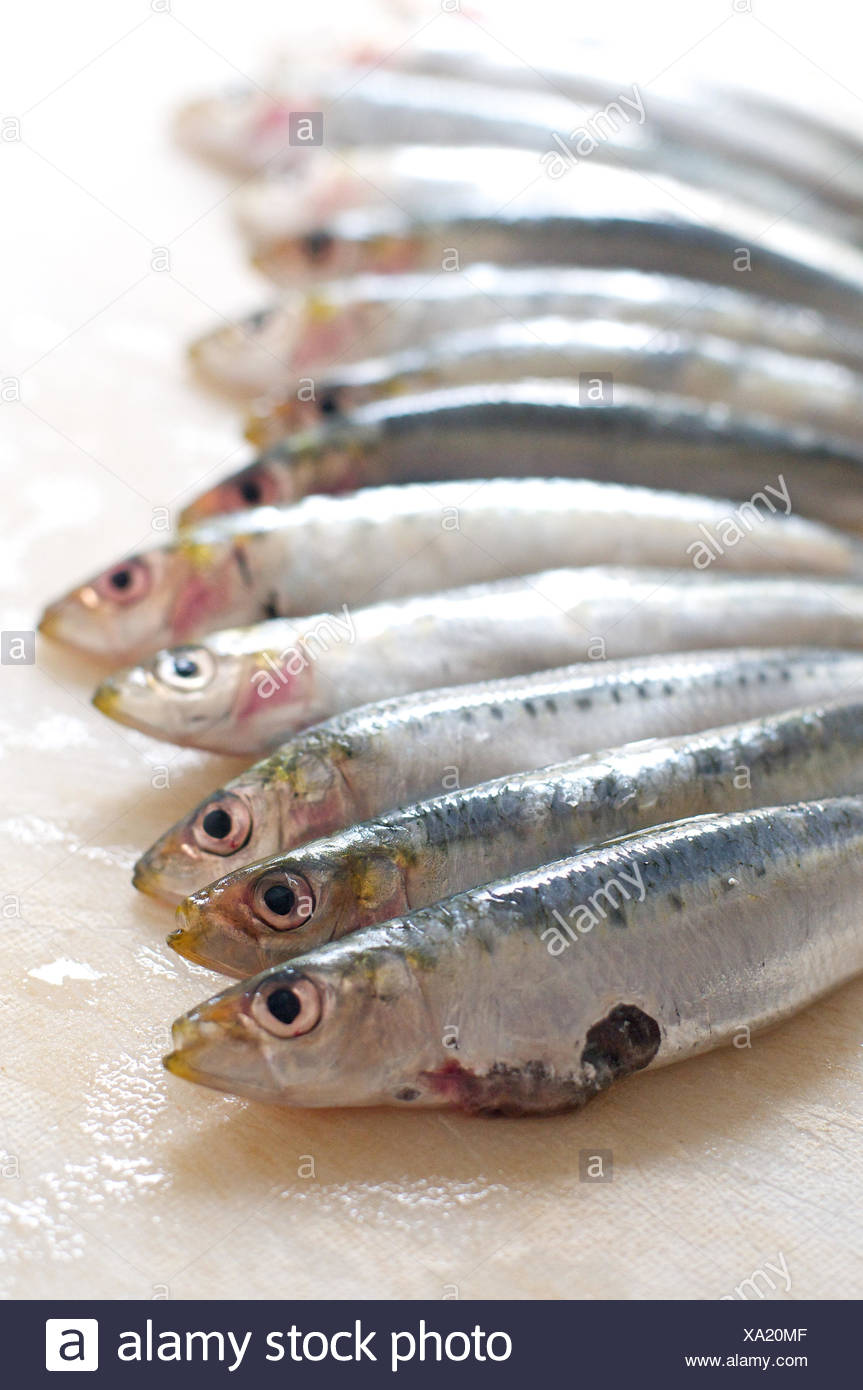 Anchovies in a row, - Stock Image