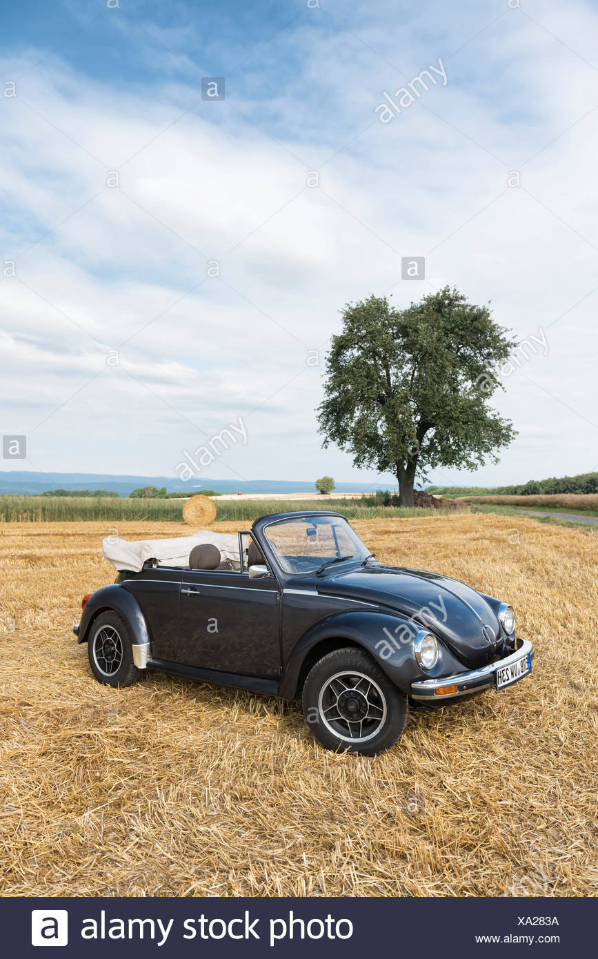 Breuberg, Hessia, Germany, VW BEETLE, cabriolet, 1977 model, 50 HP, cubic capacity 1.6 litres - Stock Image