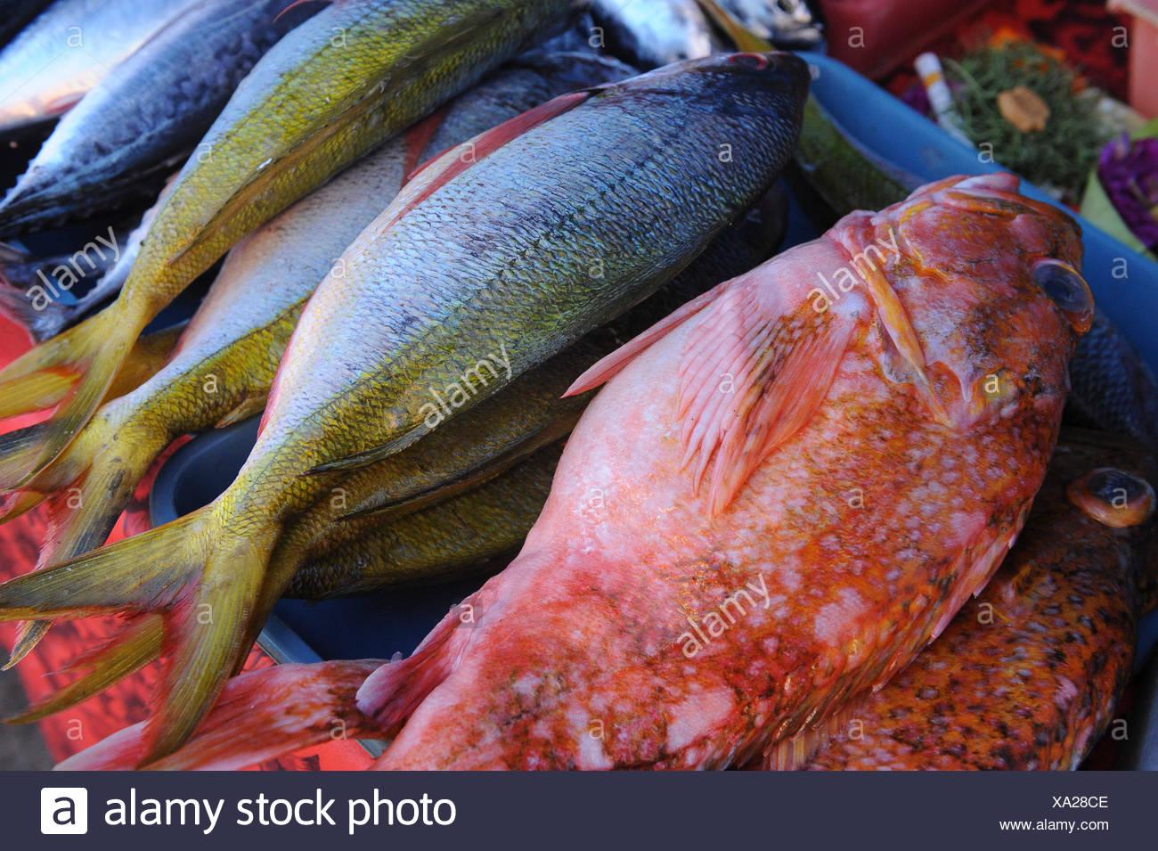 Indonesia, Bali, Denpasar, the market. Multicolored fish Stock Photo ...