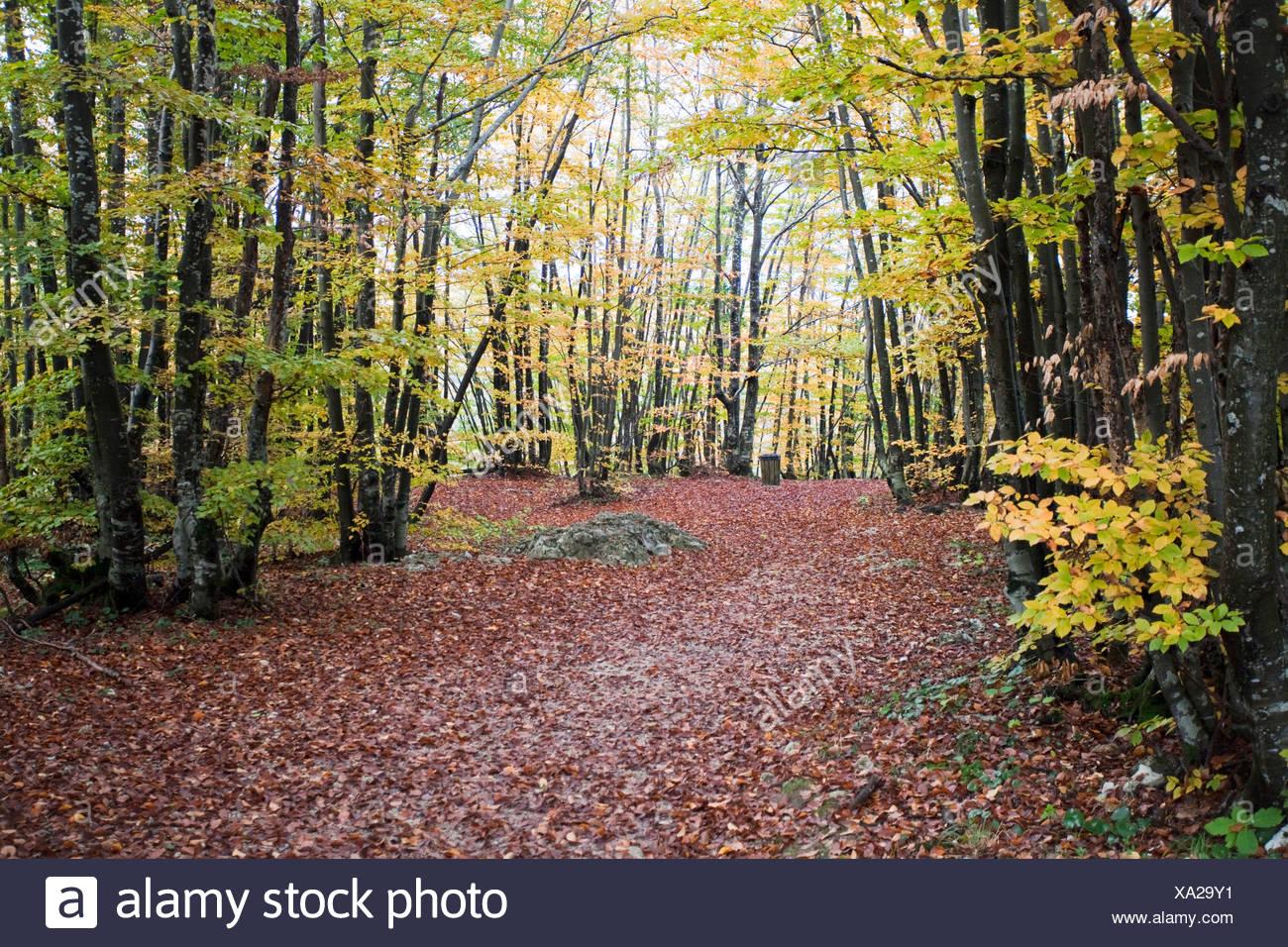 Croatia, Europe, Plitvicer lakes, Jezera, lake, sea, national park, trees, autumn, foliage, wood, forest, Stock Photo