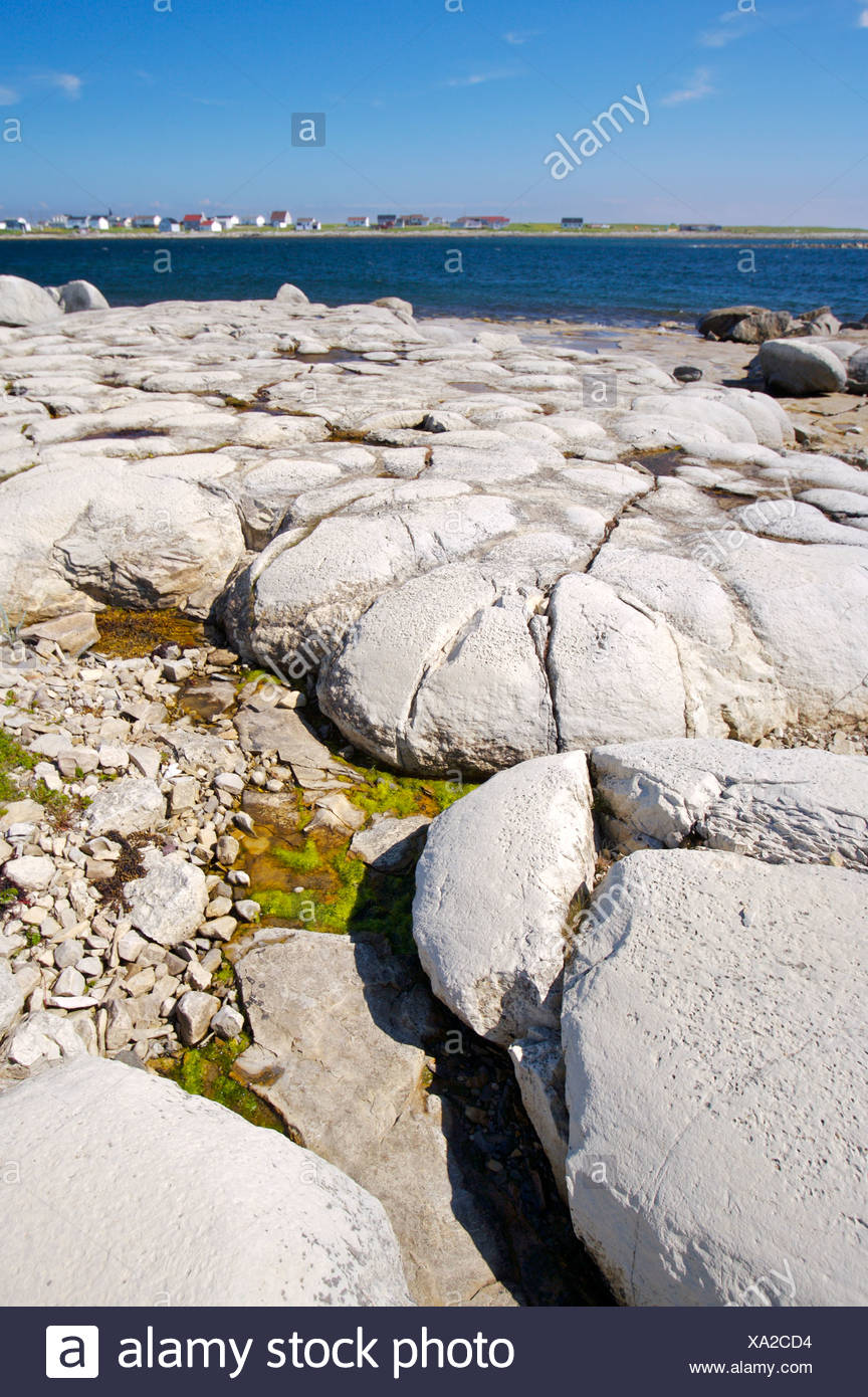 Thrombolites (the earliest forms of primitive life on earth) in Flower's Cove along Highway 430 on the Great Northern Peninsula, - Stock Image