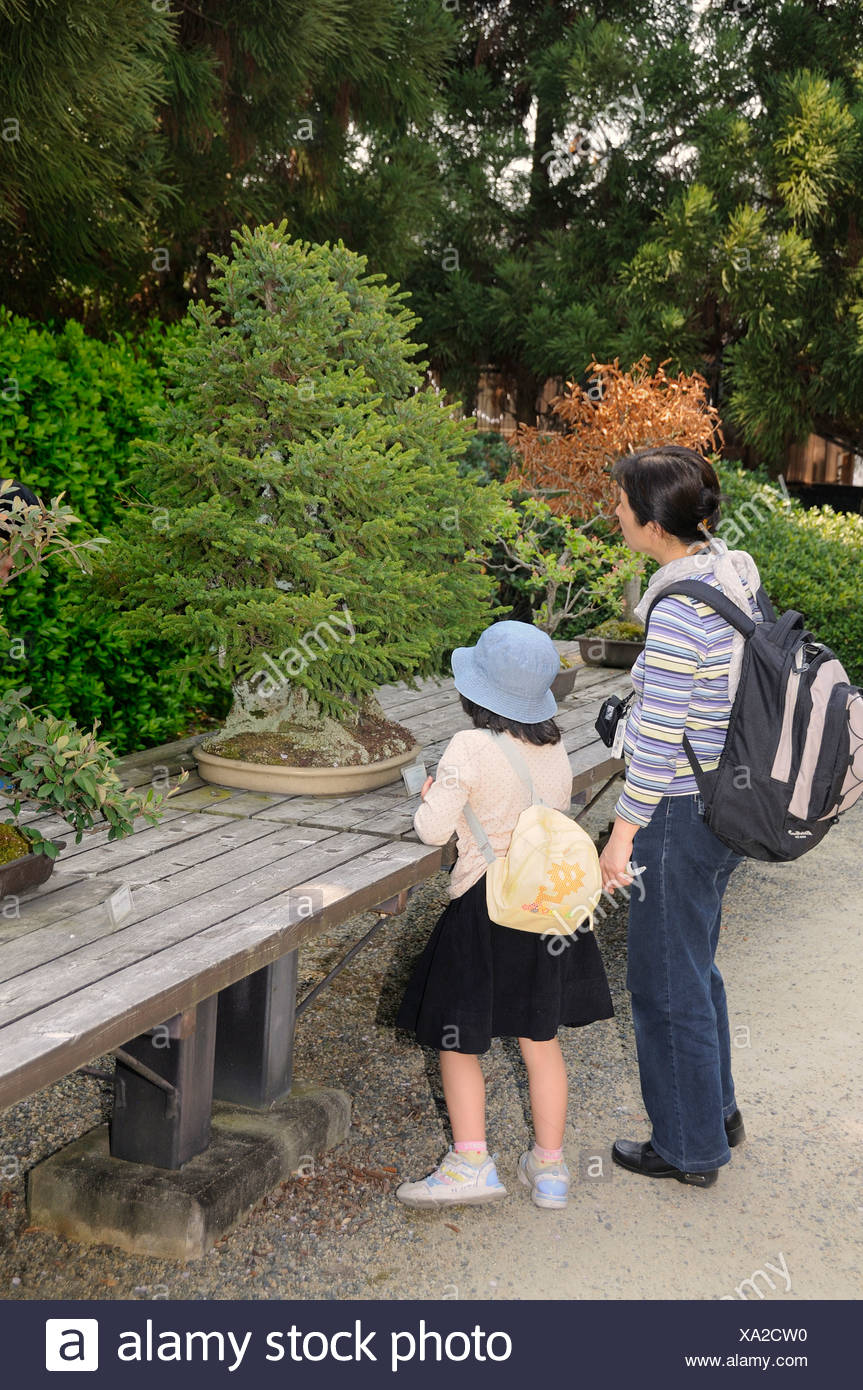 Mother and daughter looking at a bonsai conifer in the Kyoto Botanical Garden, Japan, East Asia, Asia - Stock Image