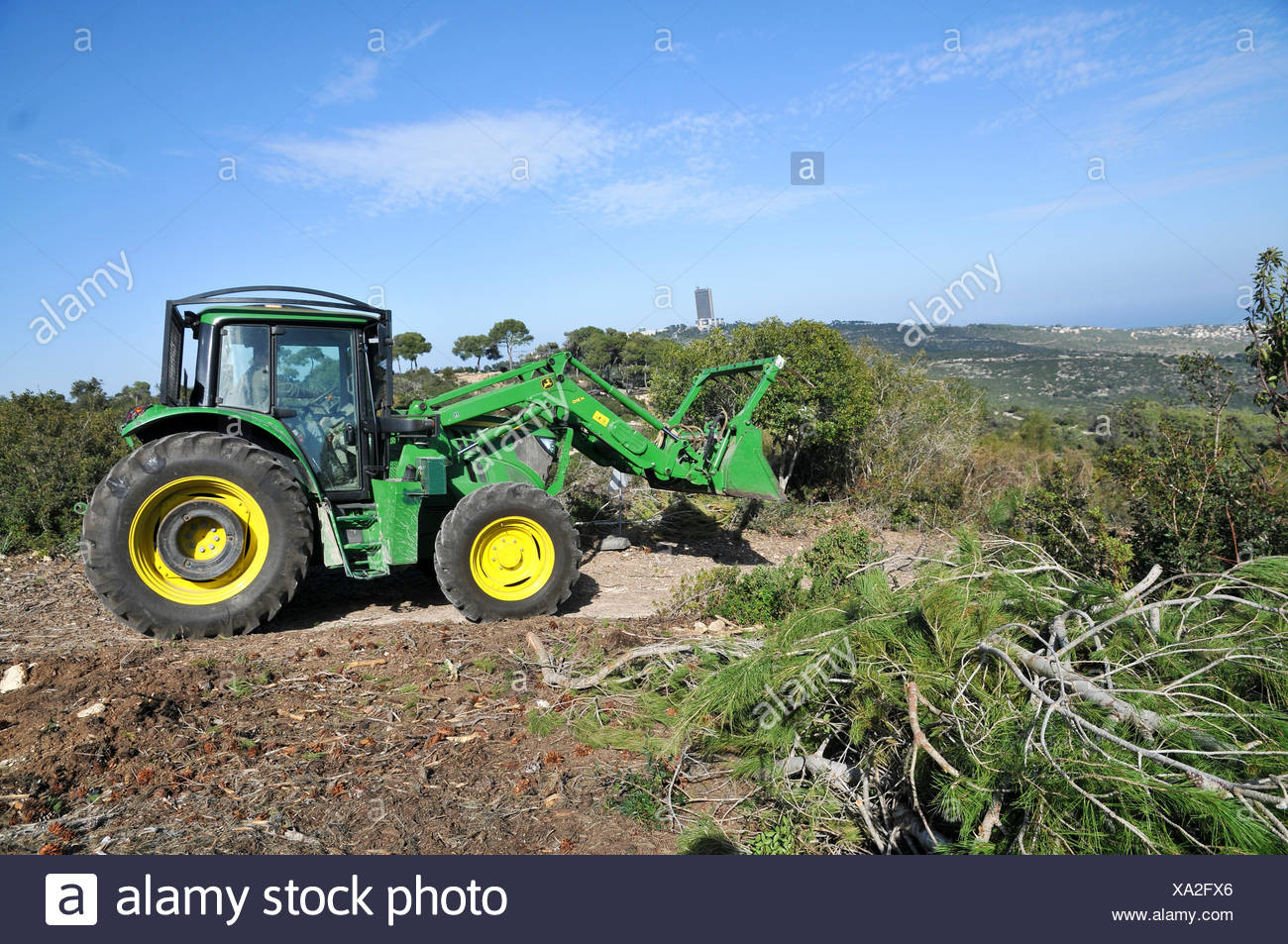 Forestation work at the Carmel forest Stock Photo
