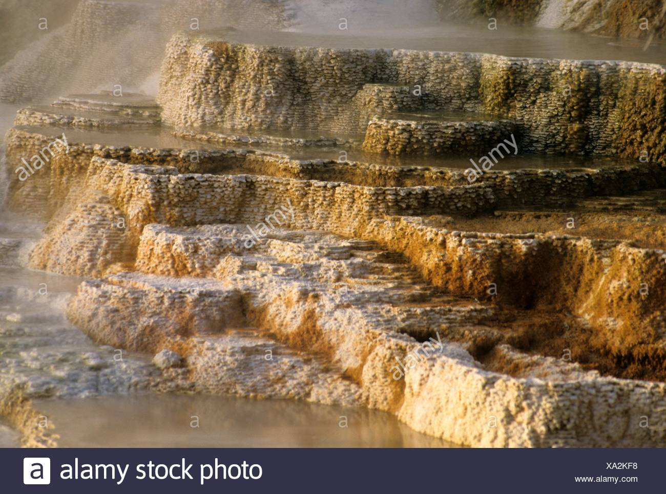 Canary Spring at Mammoth Hot Springs, Yellowstone National Park, Wyoming. - Stock Image