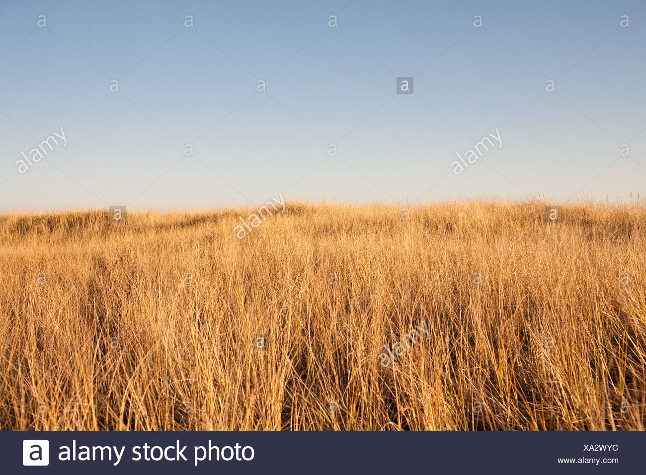 Seagrass - Stock Image