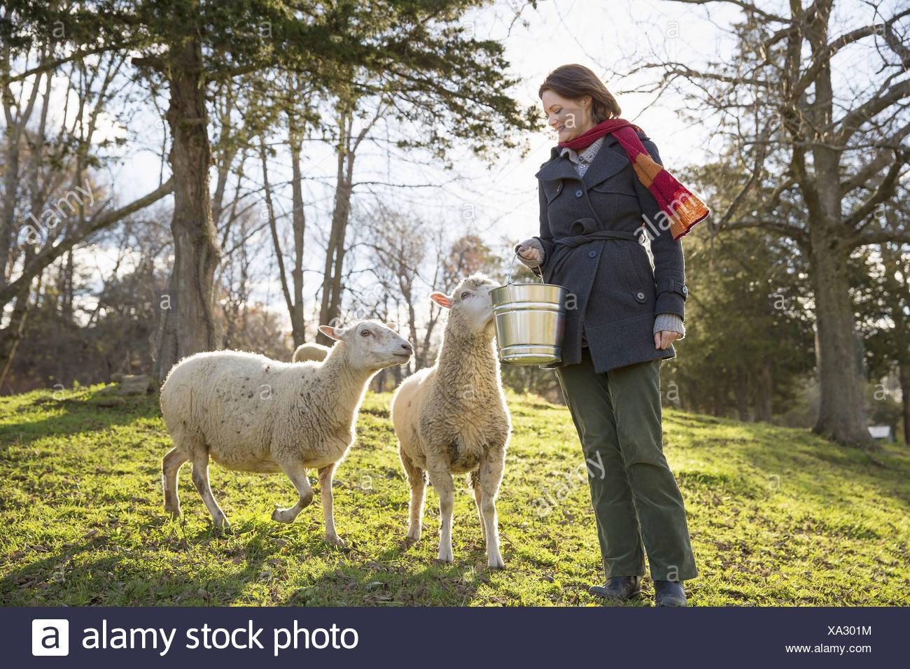 Sheep Pen Stock Photos & Sheep Pen Stock Images - Alamy