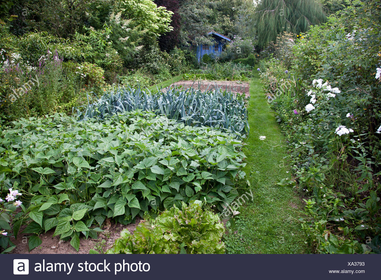 Kitchen garden at Jardins des Lianes - France - Stock Image