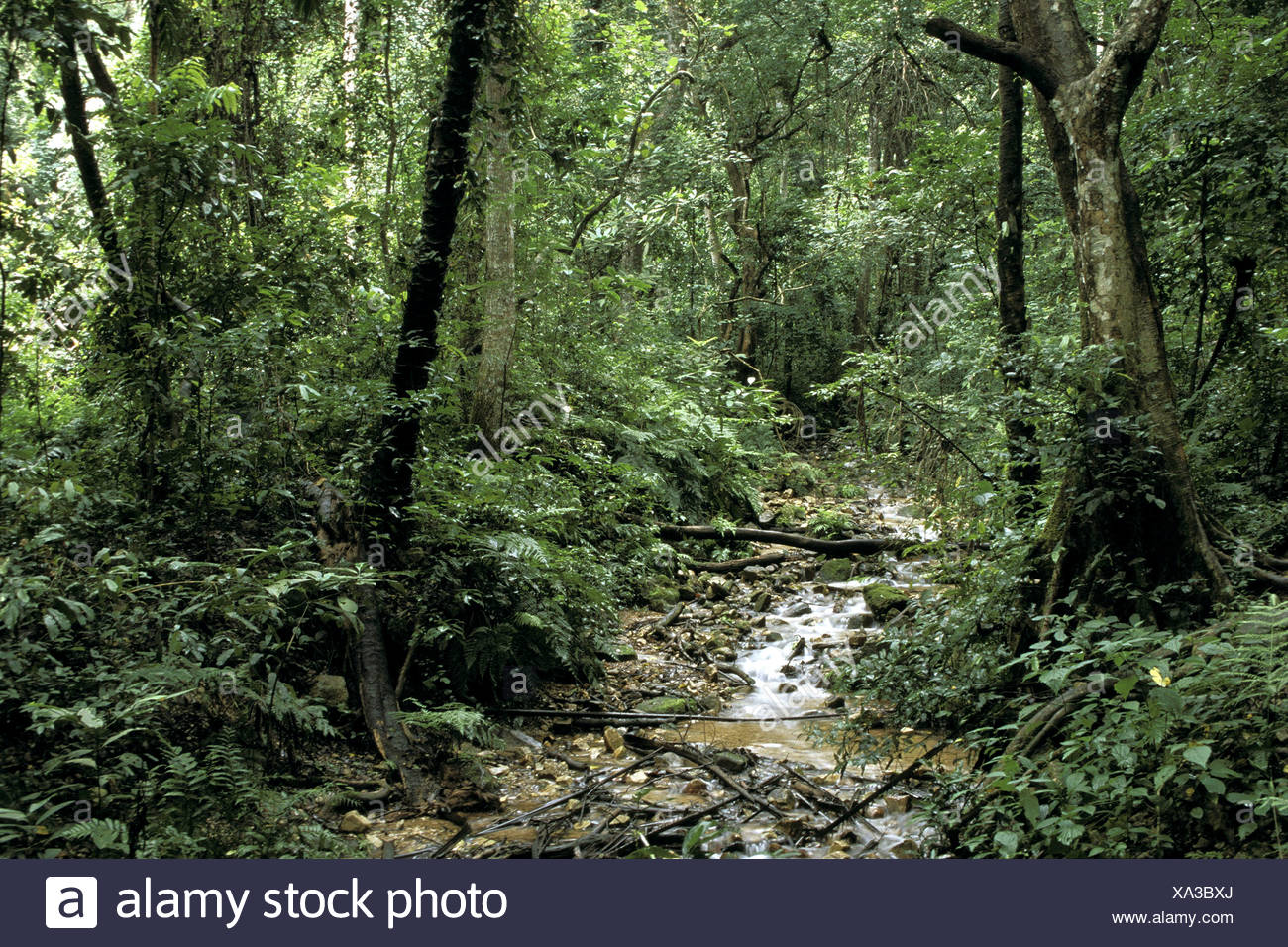 geography / travel, Tansania, landscapes, Gombe National Park, rainforest with torrent, Additional-Rights-Clearance-Info-Not-Available - Stock Image
