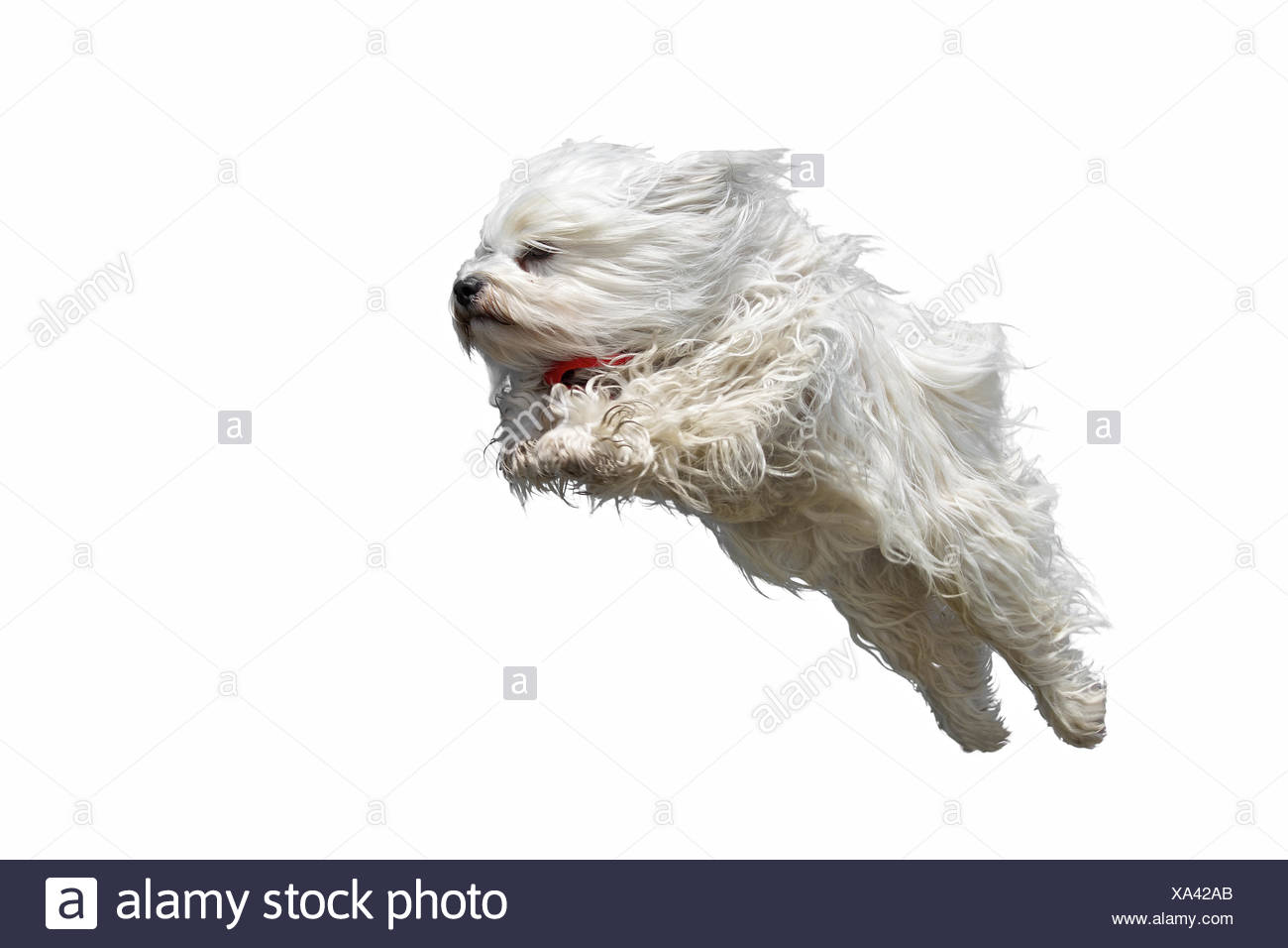 The Plunge - Stock Image