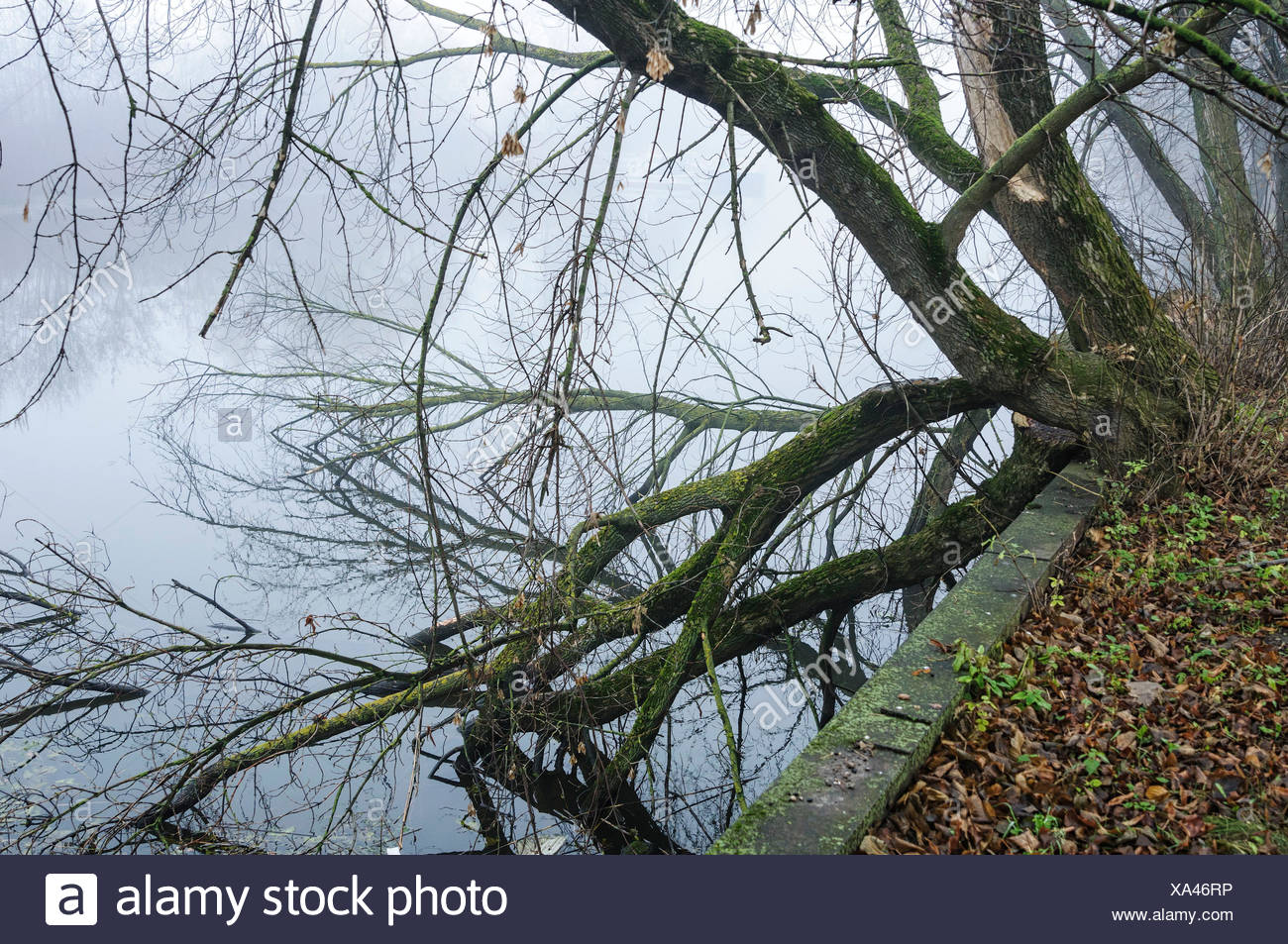 Natural Science, The trees on the riverbank, It Mists - Stock Image