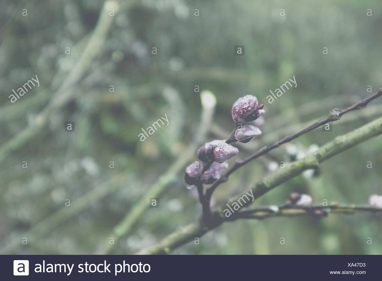 Close-Up Of Plants Against Blurred Background - Stock Image