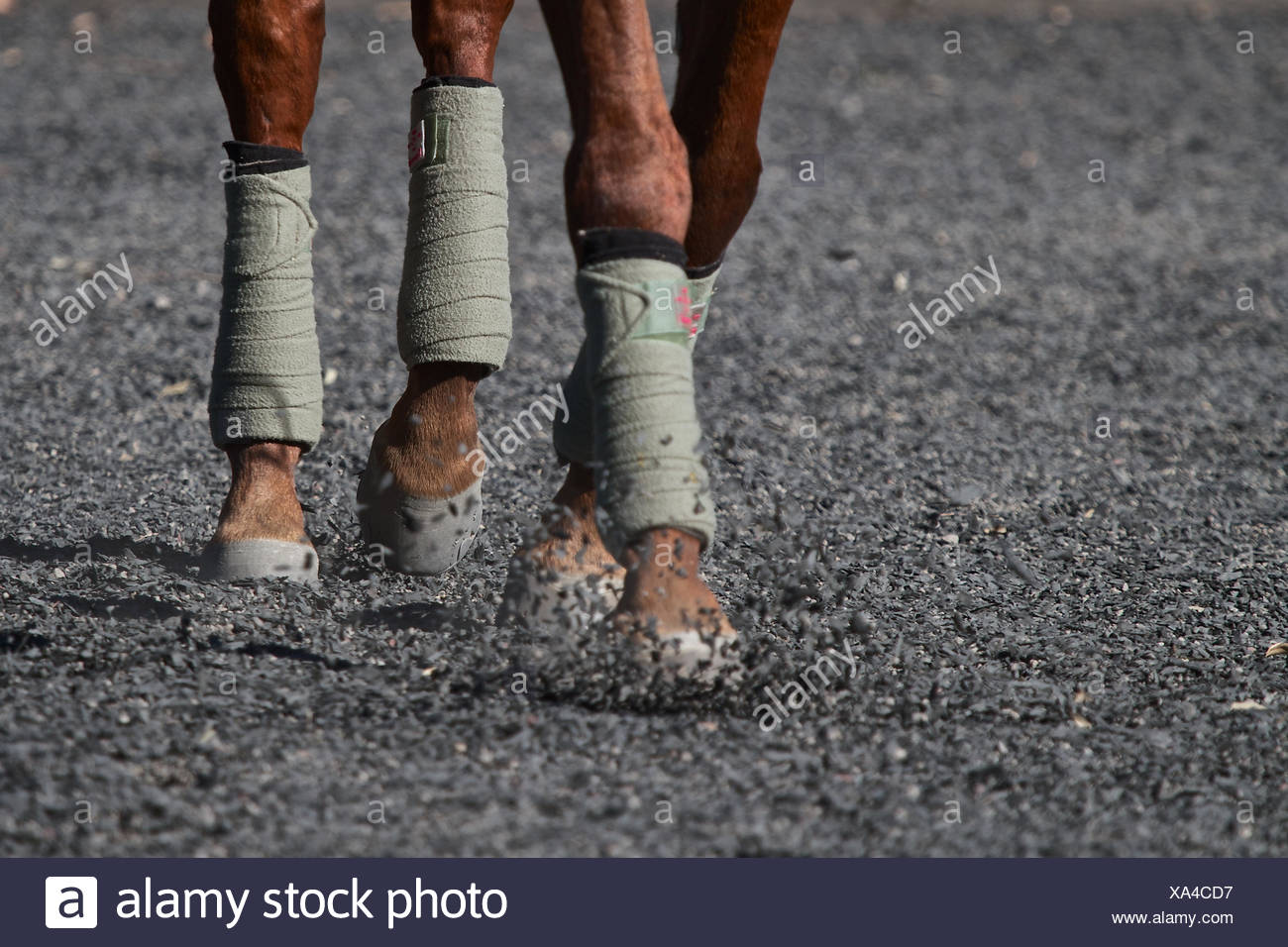 Close-up of polo horse's hooves - Stock Image