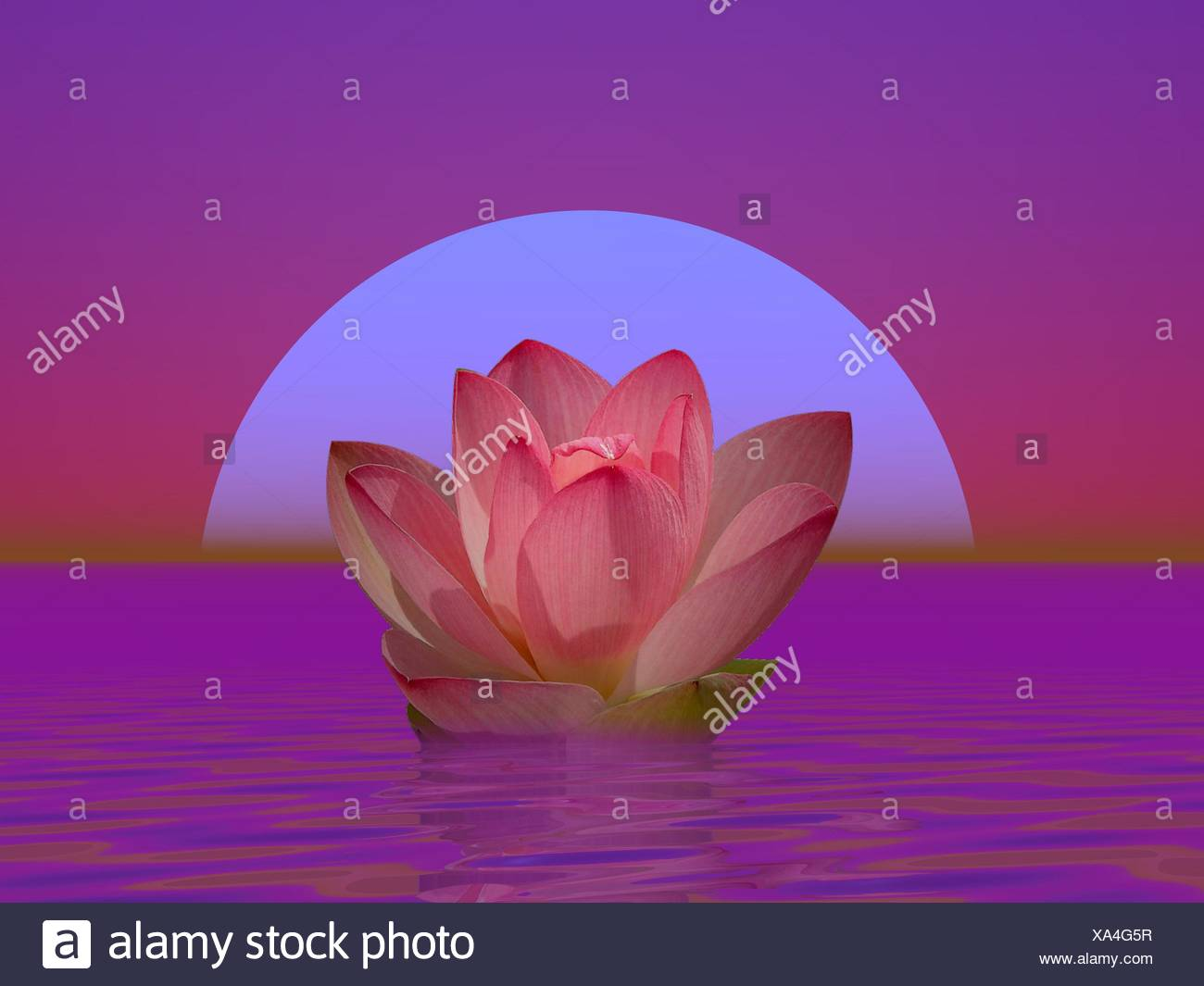 Lily Flower And Moonlight Stock Photo 281612963 Alamy