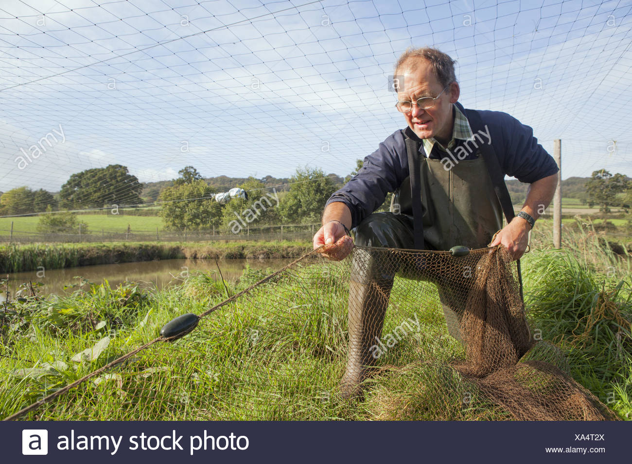 A man handling a large net, pulling it across water.  Netting young carp. A managed carp fishery. - Stock Image