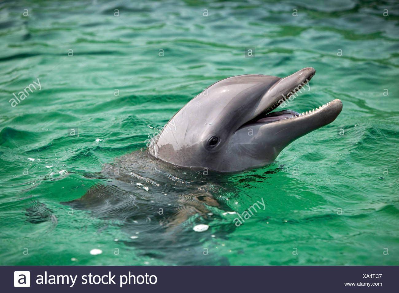 Dolphin Stock Photos & Dolphin Stock Images - Alamy