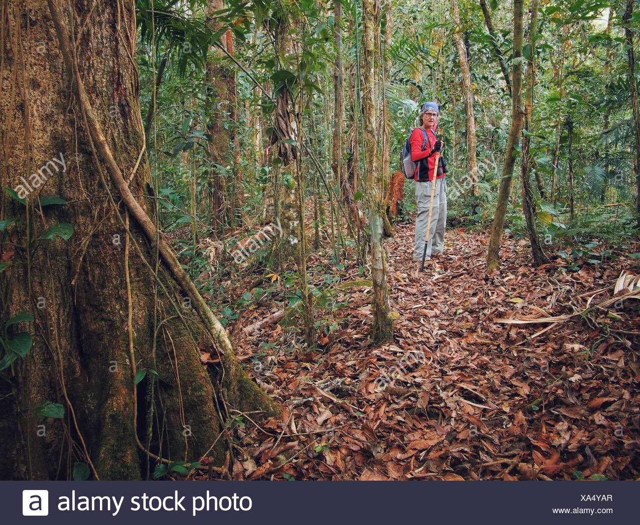 Portrait Of Senior Woman Hiking In Forest - Stock Image