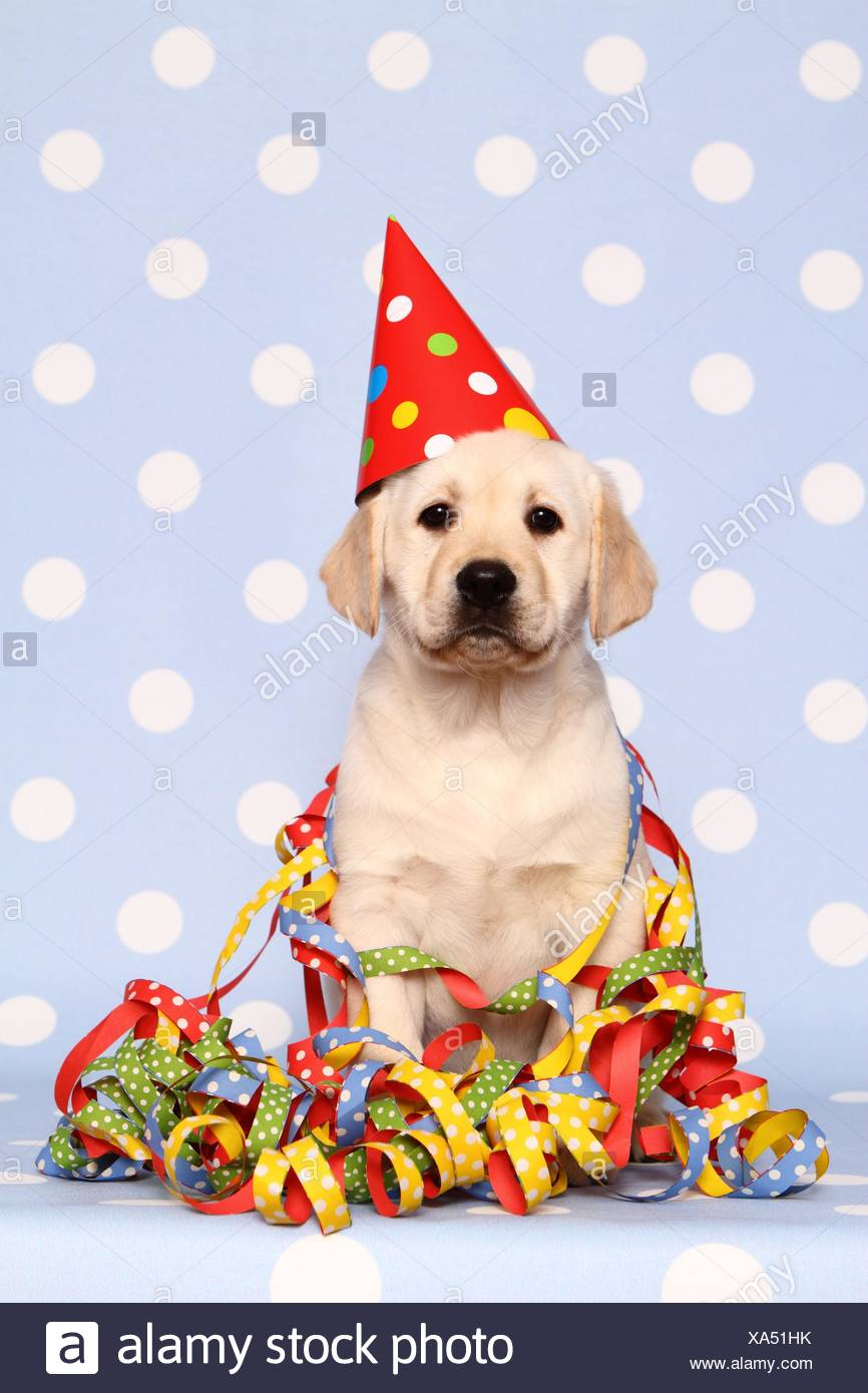 Hat Pet Streamers Stock Photos Hat Pet Streamers Stock Images Alamy