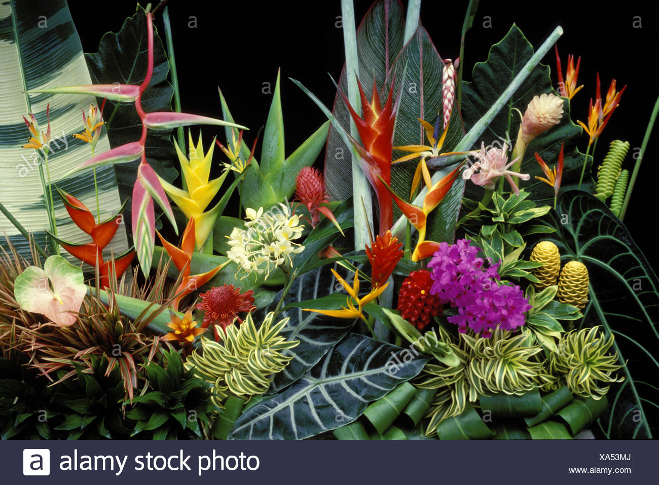 Heleconia and other tropical ornamentals - Stock Image