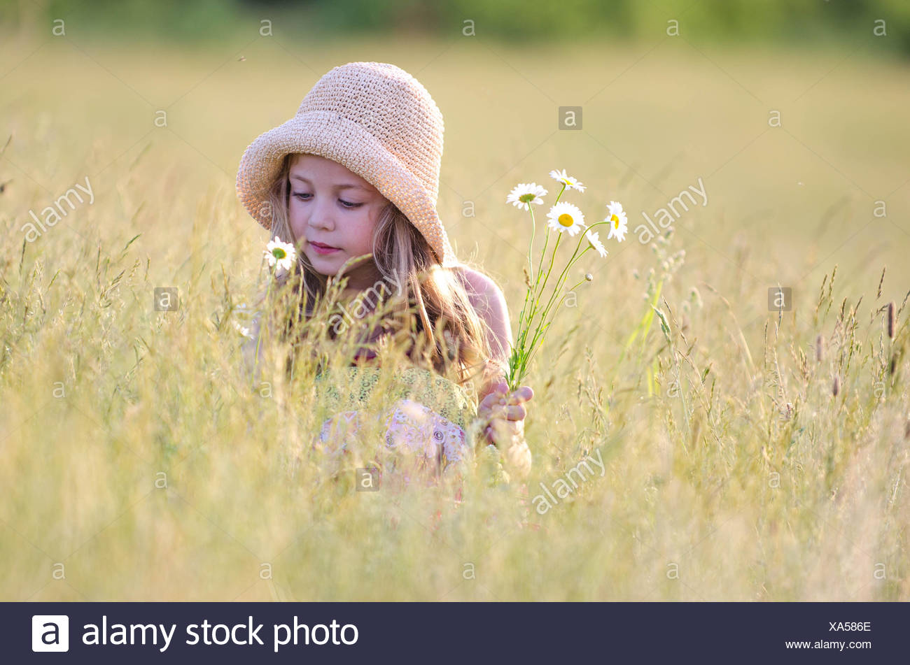 Girl picking wildflowers in meadow Stock Photo