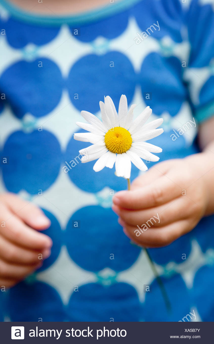 Sweden, Mid-section of girl (2-3) holding marguerite - Stock Image