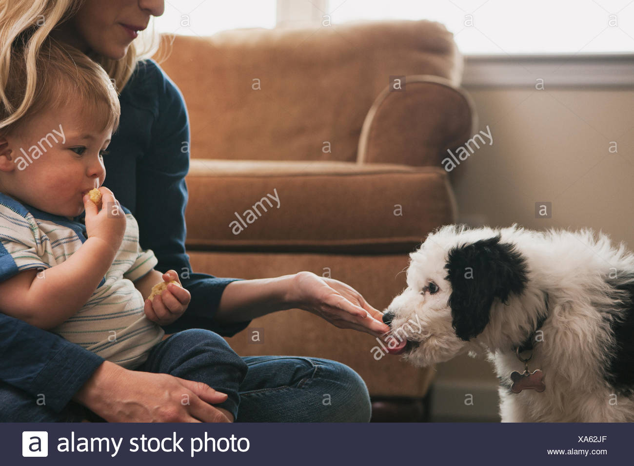 Mother and son watching dog licking hand - Stock Image