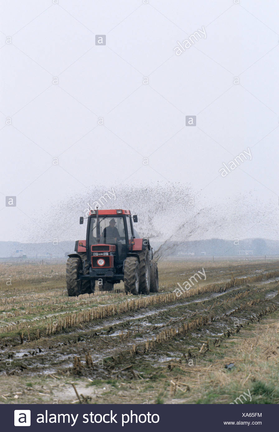 Farmer spreading manure on a field, Netherlands, Europe Stock Photo