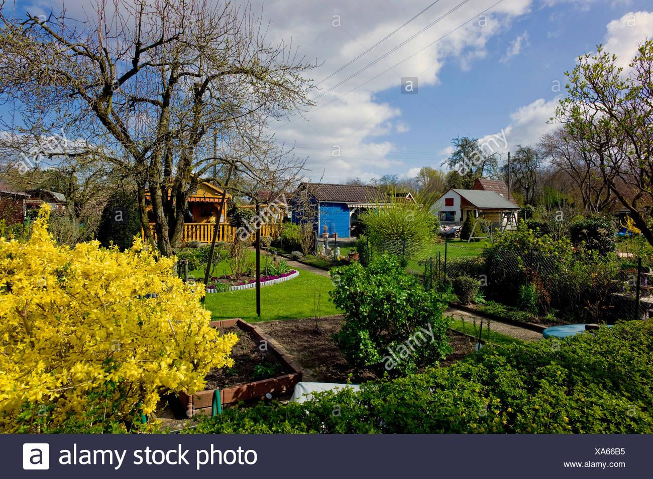 allotment garden, Germany, Freie Hansestadt Bremen, Bremen - Stock Image