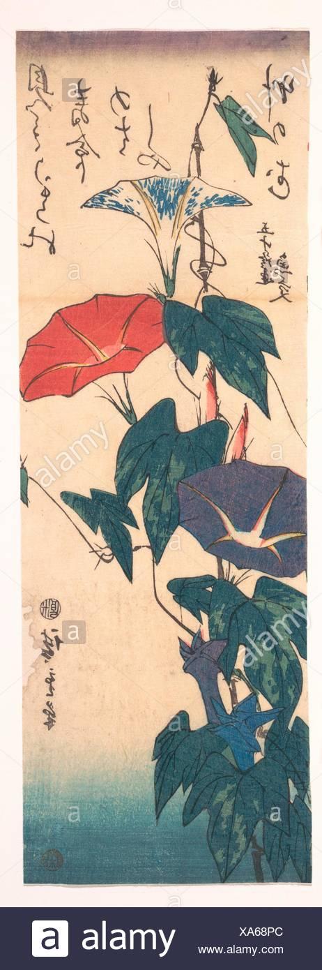 歌川広重画/Morning Glories with Poem by Gyoko. Artist: Utagawa Hiroshige (Japanese, Tokyo (Edo) 1797-1858 Tokyo (Edo)); Period: Edo period - Stock Image