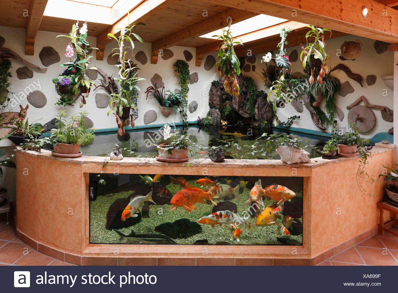 Koi, in combination of aquarium and pond, capacity of 7000 liters, Geretsried, Bavaria, Germany, Europe - Stock Image