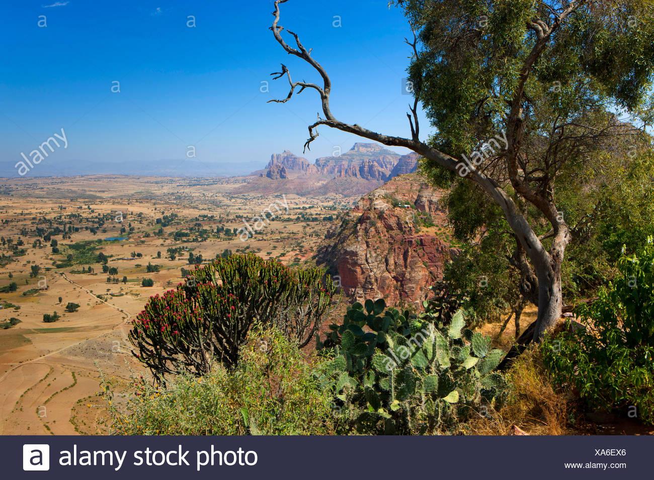 Gerealta, Africa, Ethiopia, highland, view point, tree, cacti - Stock Image