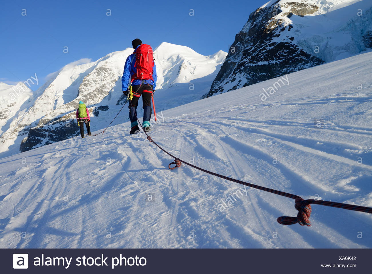 Roped party ascending on Cambrena glacier, ascent to Piz Palue, Grisons, Switzerland - Stock Image