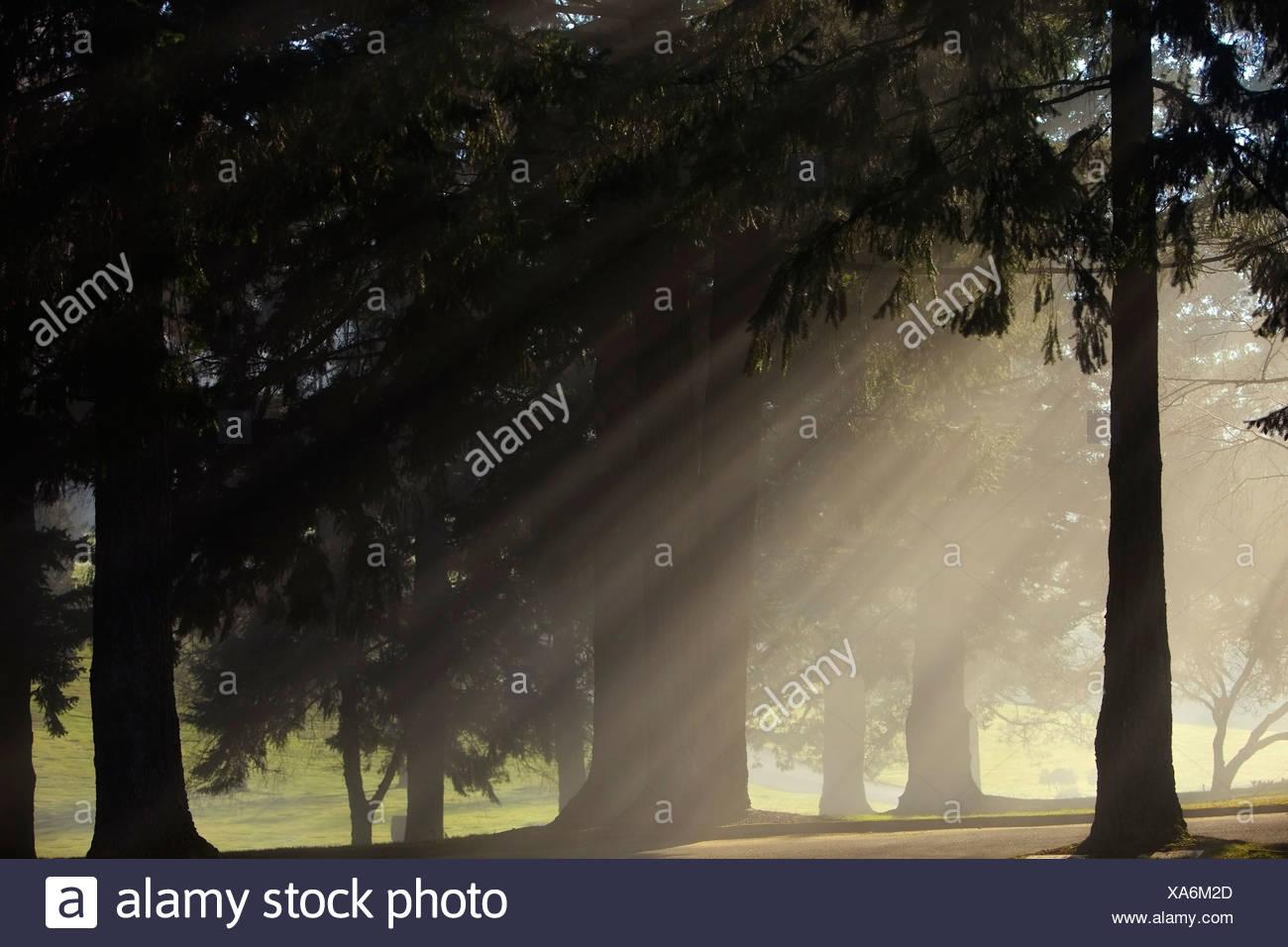 Oregon Cascades, Oregon, United States Of America; Sun Shining Through The Morning Fog And Trees - Stock Image