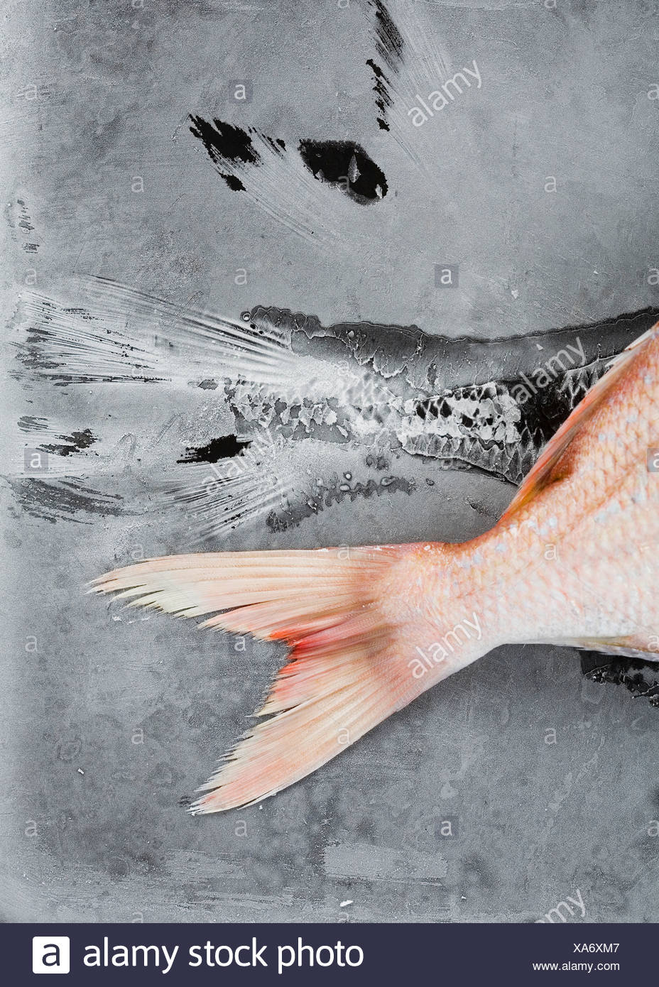 Close up of red tilapia tale - Stock Image