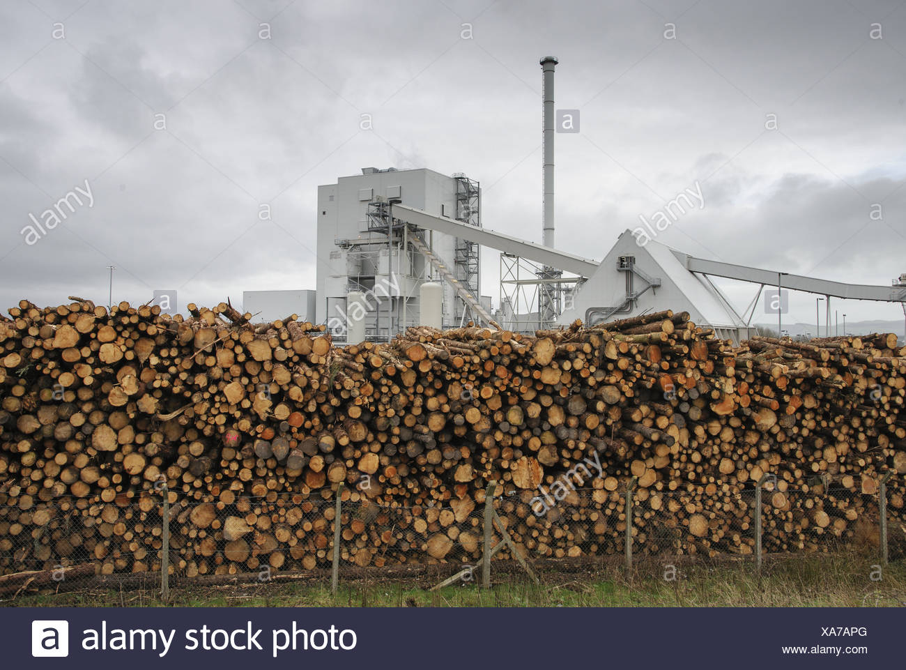 Biomass powerstation with stack of timber, largest biomass plant in Scotland, Steven's Croft Biomass Power Station, Steven's - Stock Image
