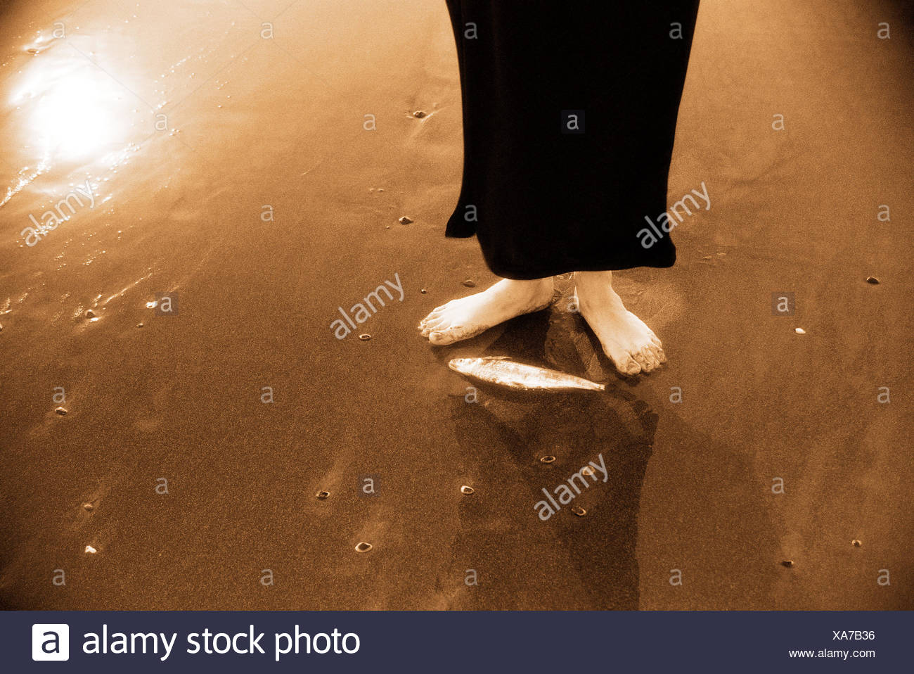 Woman standing next to dead fish on beach Stock Photo