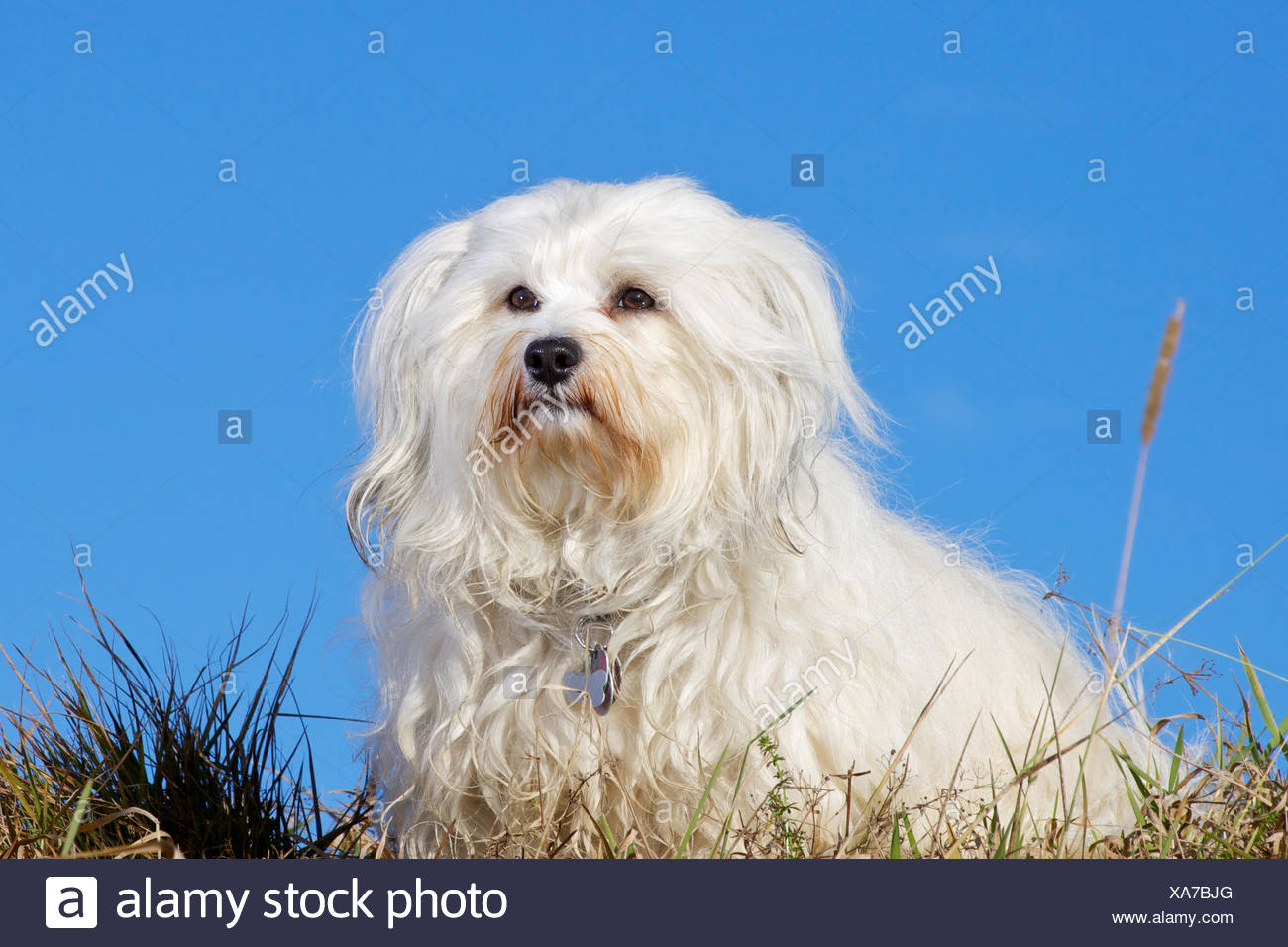 Good-natured dog looking - Stock Image