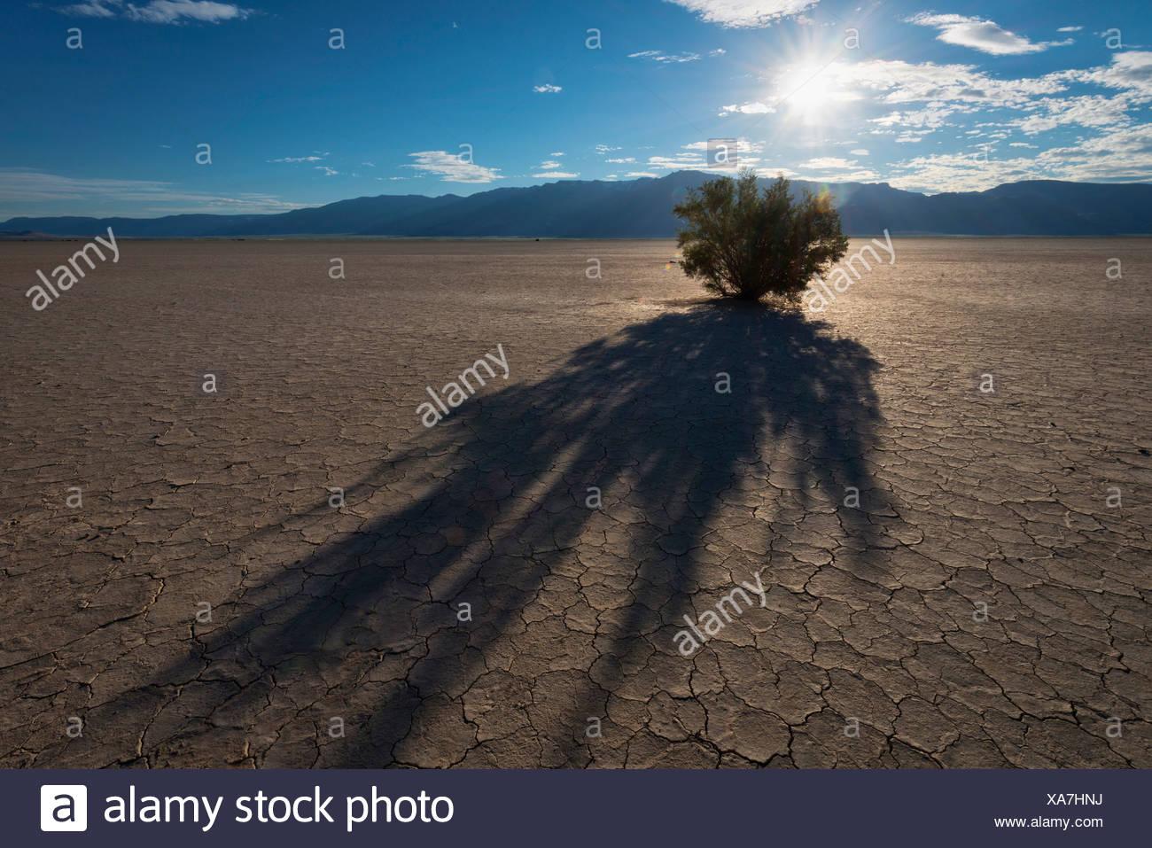 USA, Oregon, Harney County, Alvord Desert at sunset - Stock Image