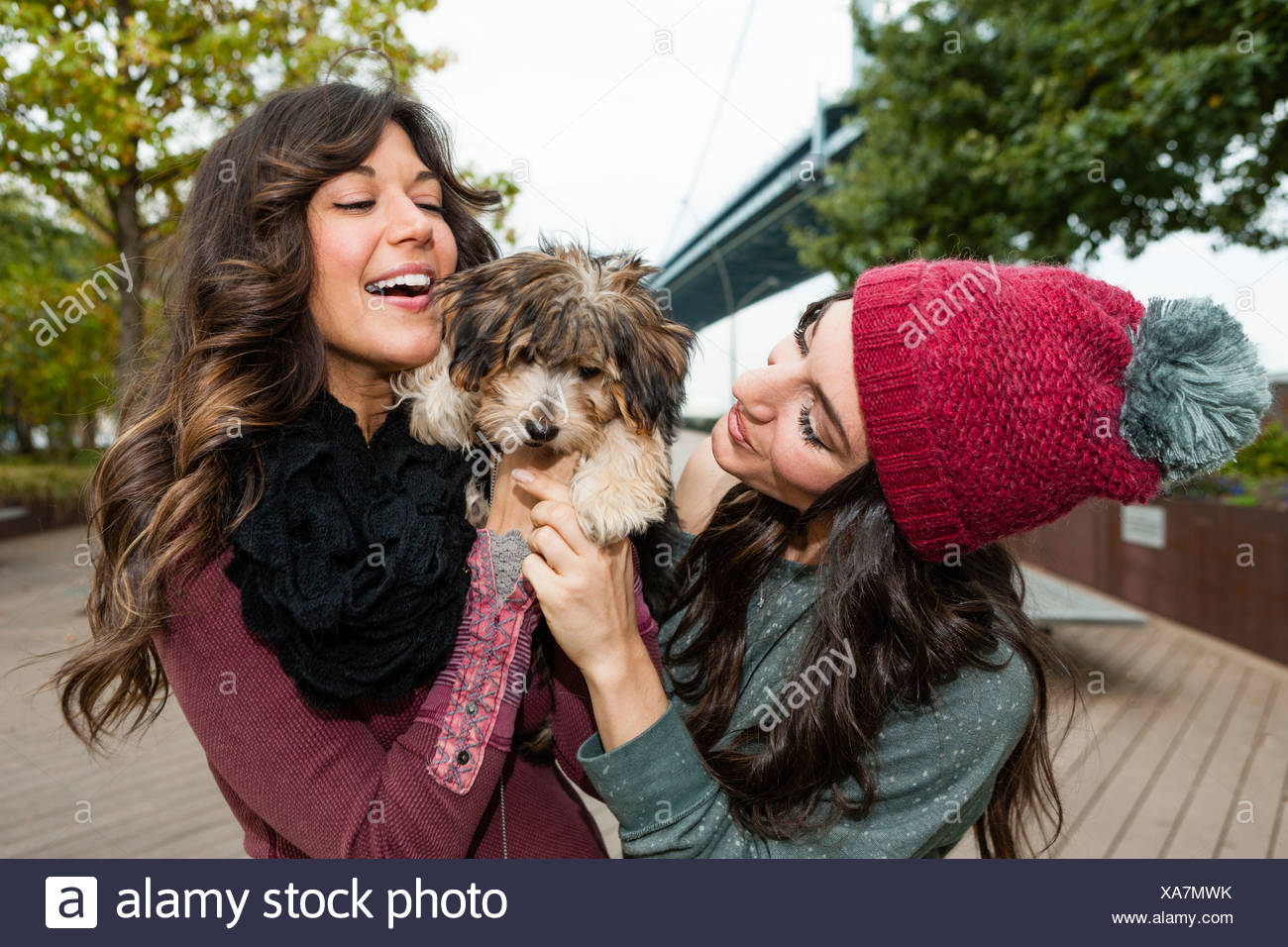 Friends holding pet dog for photograph - Stock Image