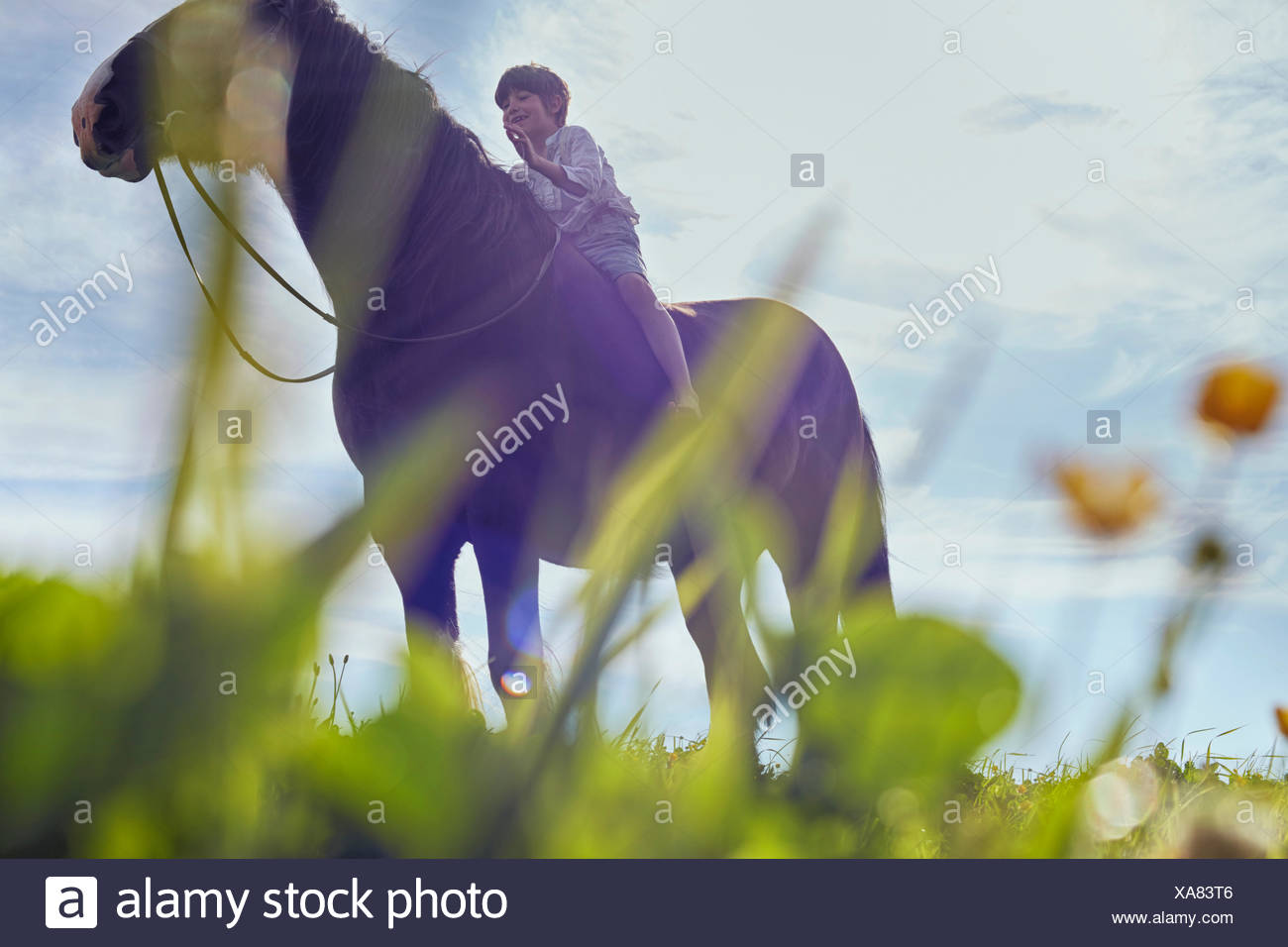 Low angle view of boy on horse - Stock Image