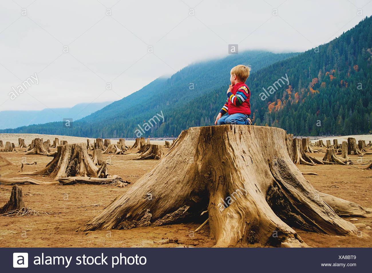 Boy (4-5) kneeling on tree stump - Stock Image
