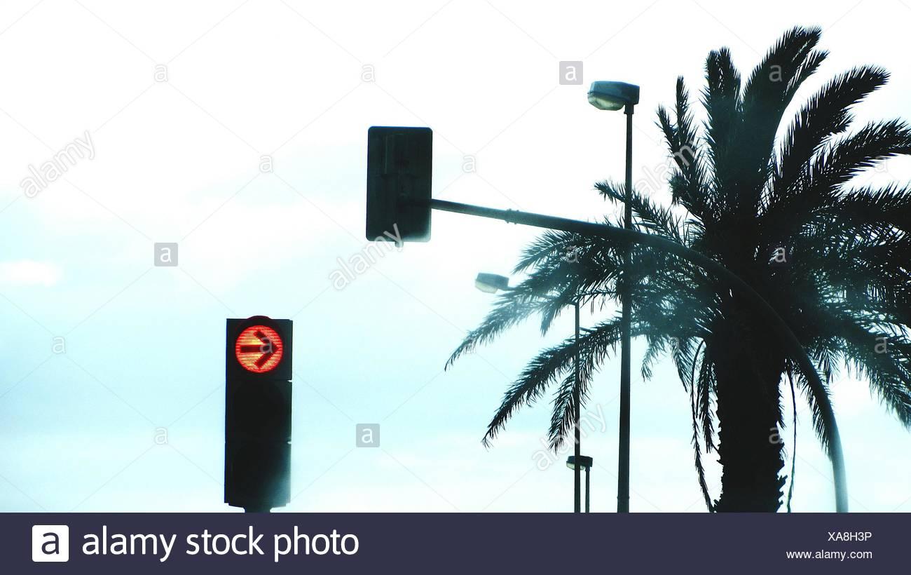 Stoplight With Palm Tree - Stock Image