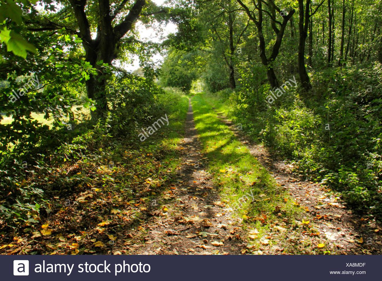 Way of St. James, pilgrims' path between Herdecke and Hagen, Germany, North Rhine-Westphalia, Ruhr Area, Herdecke - Stock Image
